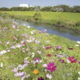 【埼玉県・富士見市】不用品の回収・粗大ゴミの処分について